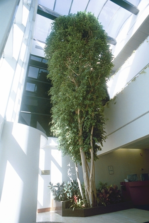 Image Result For Garden Atriums In New Jersey