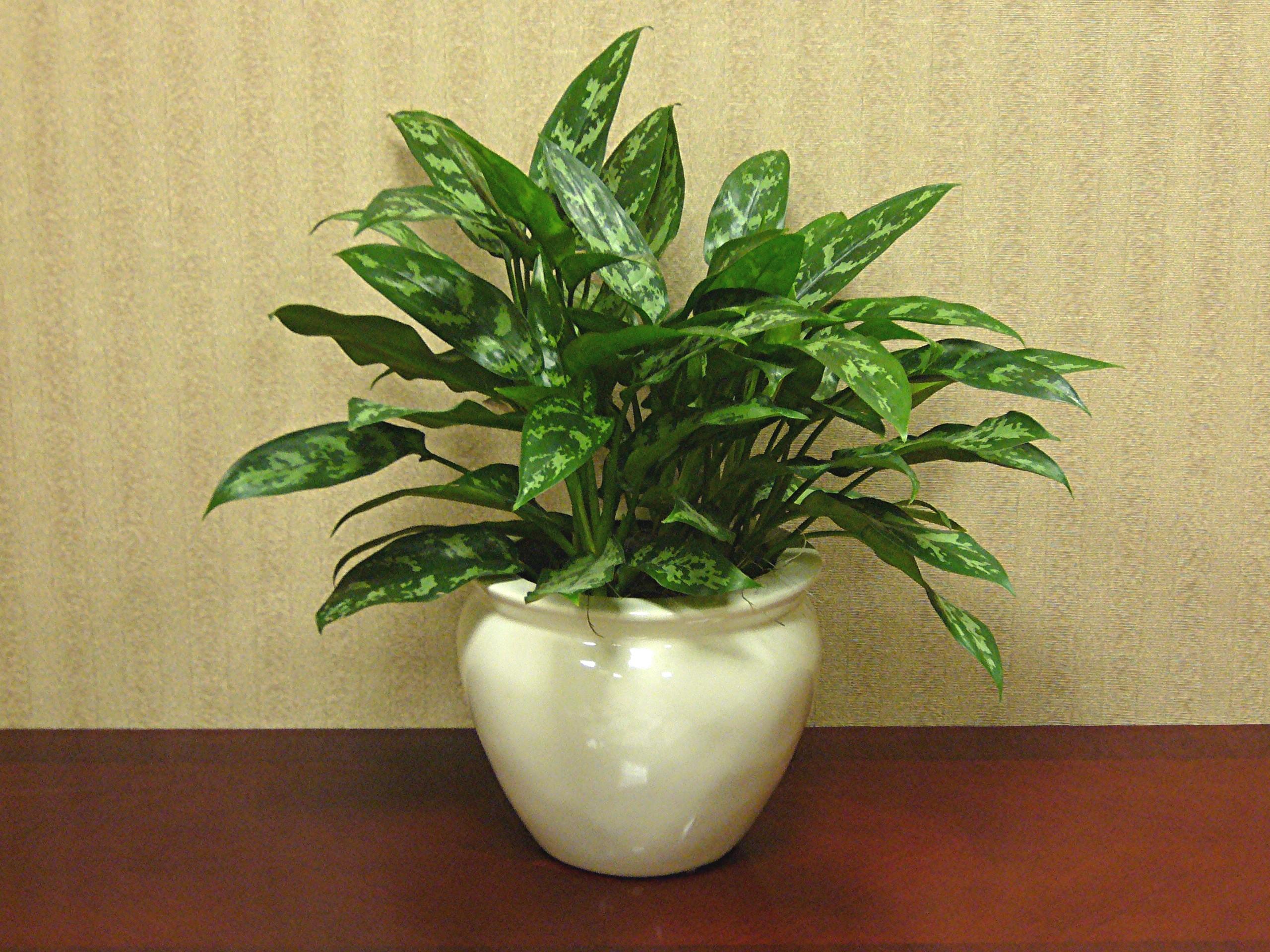 Interiorplantsnj Residentialinteriorplantsnj Houseplantsnj